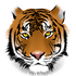 Peterson Elementary School  Tiger